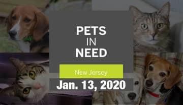 N.J. pets in need: Jan. 13, 2020