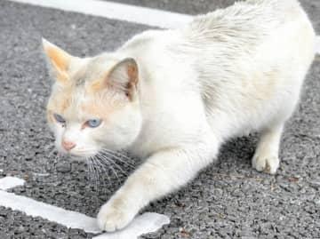 (資料写真)住宅地を歩くネコ