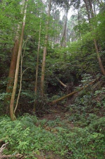 放置され倒木も目立つ県央部の山林。新システムでは自治体側に管理を委託する山林が大幅に増える可能性がある