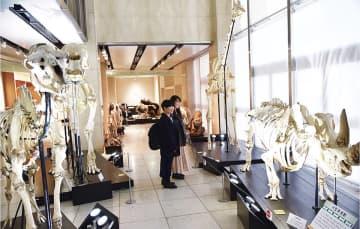 サイなどの骨格標本が並ぶ陸エリア