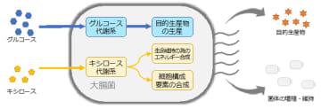 PMPE大腸菌を用いたモノづくりの概要。(画像: 発表資料より)