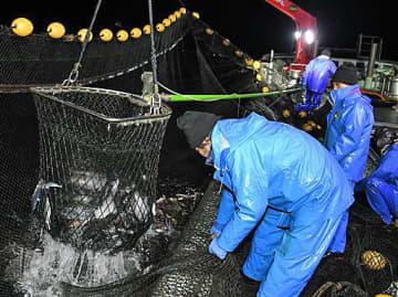 網の中央に追い込んだ魚をたも網ですくう船員ら=15日午前3時55分、八戸市種差沖