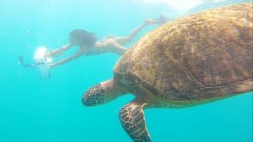 自力で泳がなくてもウミガメと泳げる?? ハワイの最新マリンアクティビティって?