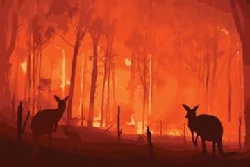 オーストラリア森林火災の支援に「ひと肌脱ぐ」モデルが続々 世界で広がるチャリティ手法 画像