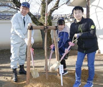 【櫻井市長(左端)とソメイヨシノの木を植樹する6年生児童ら=亀山市本丸町の市立亀山西小学校で】