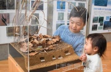 越冬する昆虫ジオラマ紹介 桐生