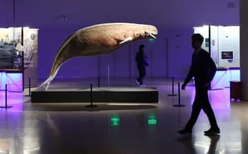 上海で「鯨奇世界」展開催