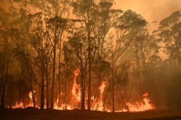 Australia's bushfires have swept through an area larger than Portugal.