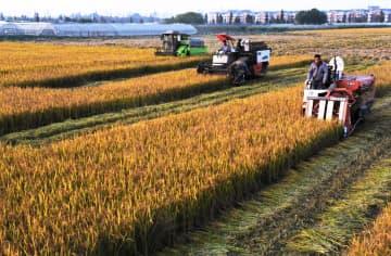 19年浙江省農村部住民の1人当たり可処分所得は約3万元