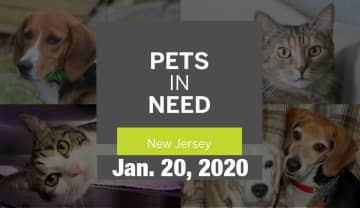N.J. pets in need: Jan. 20, 2020