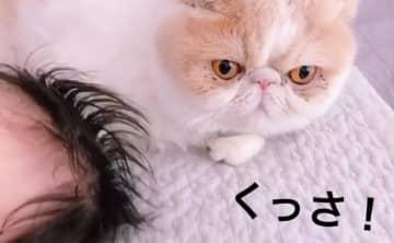 「…くっさ!」赤ちゃんのニオイを嗅いだ猫の反応が最高に面白かわいい♡