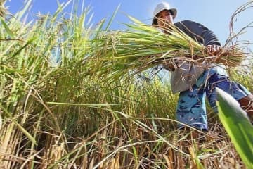 Agriculture output slightly grew in 2019