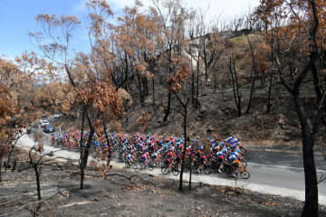The peloton is seen in a bushfire-damaged area in the Adelaide Hills during stage two of the Tour Down Under from Woodside to Stirling in South Australia on Wednesday. (Reuters photo)