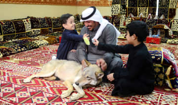 Rami Al-Sarhan, an employee of a money transfer company, sits with his sons and his wolf 'Adeem' in the traditional majlis at his farm in Al-Jouf.
