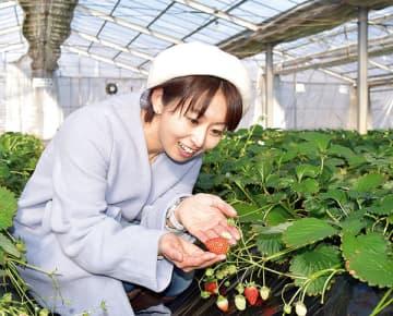 ビニールハウス内で真っ赤に実ったイチゴ=長瀞町中野上の長瀞福島農園