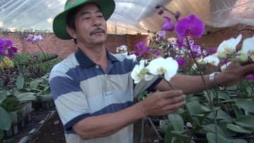 ベトナム・ダクラク省の花農家 旧正月前のかき入れ時