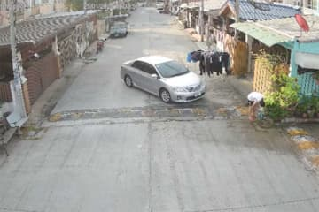 An image captured from a video posted to Facebook shows a car moving toward a man watering plants in front of his house in Ayutthaya on Saturday. The car ran over the man, killing him instantly.