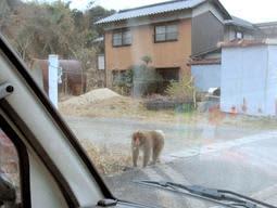 人を恐れず民家近くに繰り返し出没したサル。この写真を撮影後、車に体当たりしたという=2019年11月下旬、姫路市林田町中山下(住民提供)