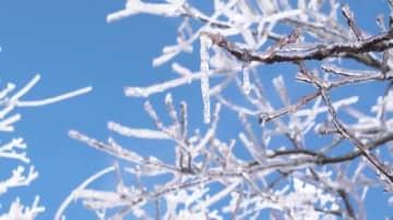 一面の霧氷が織りなす神秘の冬景色 安徽省九華山