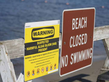 The beach area at Hopatcong State Park was one of several beaches on Lake Hopcatcong that were closed to swimming last summer due to a harmful algal bloom. (Patti Sapone | NJ Advance Media/)
