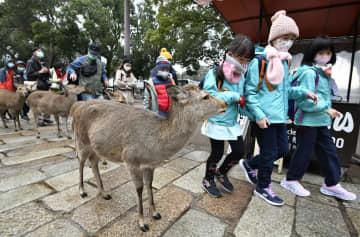 奈良公園で目立つマスク姿の子ども=29日午前、奈良市