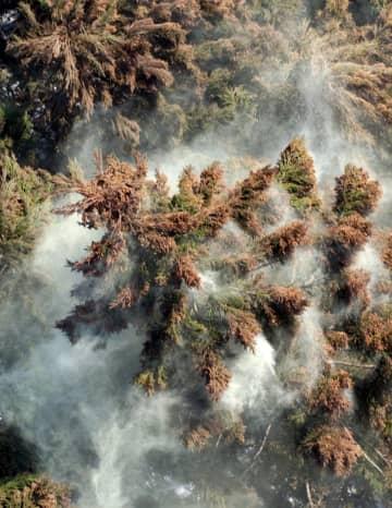 煙のように舞い上がるスギの花粉=2005年3月、相模原市