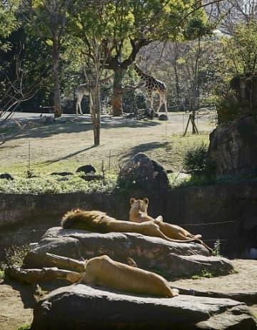 大阪市の天王寺動物園(同園提供)