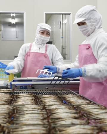 岩手県大船渡市の水産会社で働く中国人実習生=2019年