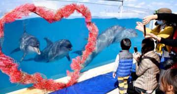 イルカを撮影する来場者=1日、本部町・沖縄美ら海水族館
