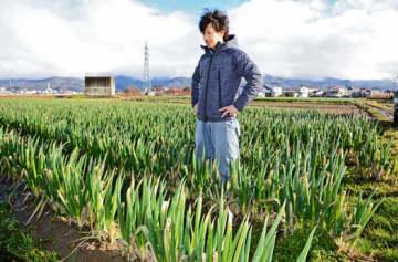 ネギの生育状況を見る佐藤さん。例年は雪の下に埋まるが今年は畑に雪がない