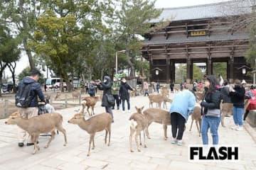 1月31日の奈良公園。「台湾や香港、シンガポールからの人が多い」(ガイド)