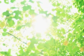 相模原・木もれびの森で「キコリ体験とシイタケホダ木ゲット!」森の保全活動を学ぶ