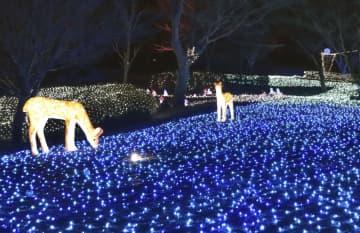 奈良公園で披露された「しあわせ回廊なら瑠璃絵」の試験点灯=7日夕、奈良市