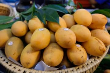Sweet Yellow Marian Plum is Nakhon Nayok's GI product.