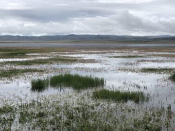 湿地生態システム「地球の腎臓」再生 甘粛省