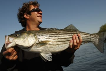 Mickey Melchiondo of the group, Ween, proudly displays the striped bass he caught in the Delaware River in 2011. Melchiondo, aka, Dean Ween, leads a double life as fishing guide/rock guitarist.