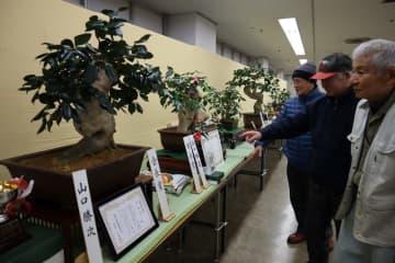 丹精込めて育てた作品が並んだ展示会=長崎市民会館