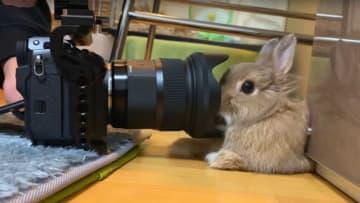カメラ慣れしすぎたウサギが可愛い…顔にズモッとなっても、なぜ嫌がらないのか聞いてみた 画像