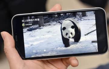 北京動物園が始めた「オンライン動物園」で見られるパンダの動画。新型コロナウイルスの感染拡大で閉園が続いている(共同)