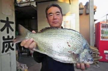馬天港で48.2センチ、2.4キロのチンシラーを釣った米蔵守さん=3日