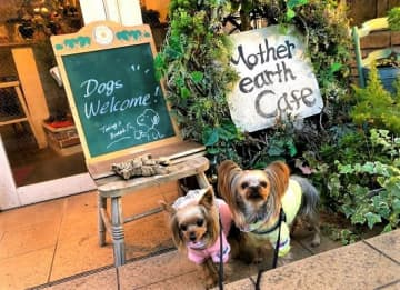 愛犬家必見!恵比寿のおしゃれカフェ「マザーアースカフェ」でわんことディナー 画像
