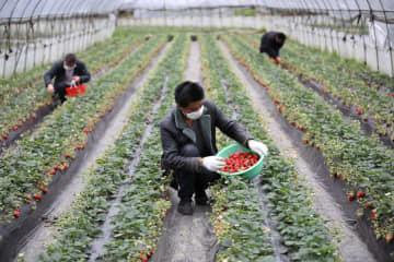 農作業にいそしむ中国各地の農家