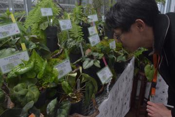 筑波実験植物園 「カンアオイ」生態紹介 国内外36種展示