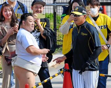 ランニング中も視野は広く 阪神・福留が球場を出た先にまわし姿のあの人が