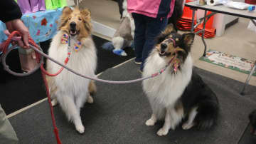 The first birthday of Sterling (left) and Lucy (right) was celebrated on Saturday. (Caroline Fassett/)