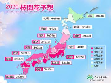 桜の開花は記録的に早くなる見込み