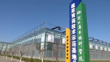 市民の食生活を守れ!曲周県で野菜苗3億株出荷へ 河北省