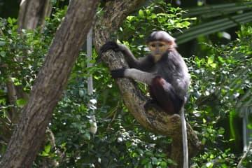 シンガポール動物園の赤ちゃんたち