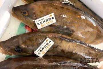 北海道の鮮魚やオリジナル弁当が東京駅で買える!北海道新幹線で東京駅へお届け