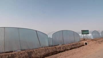 感染対策を徹底し農業にいそしむ 新疆ウイグル自治区